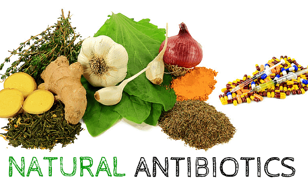 10 Most Effective Natural Antibiotics and How to Use Them