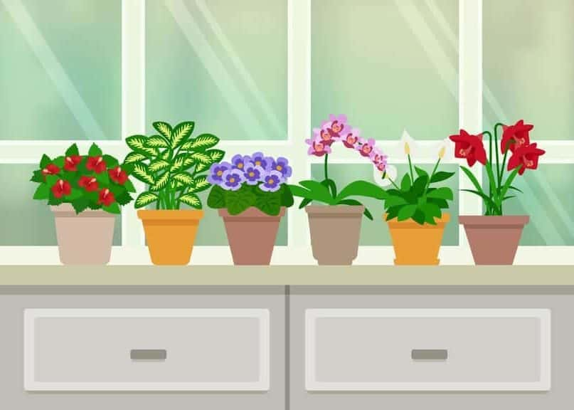 15 Houseplants That Will Improve Your Indoor Air Quality