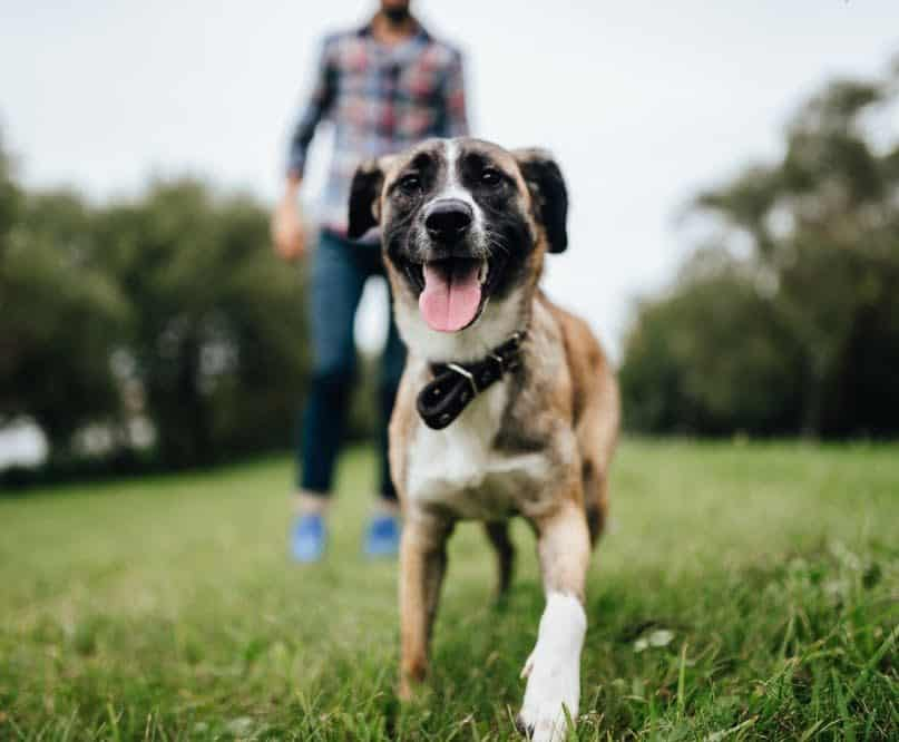 Owning a Dog Could Help People Live Longer