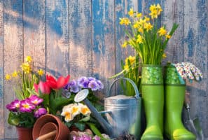 Gardening Can Help to Relieve the Stress the World is Feeling